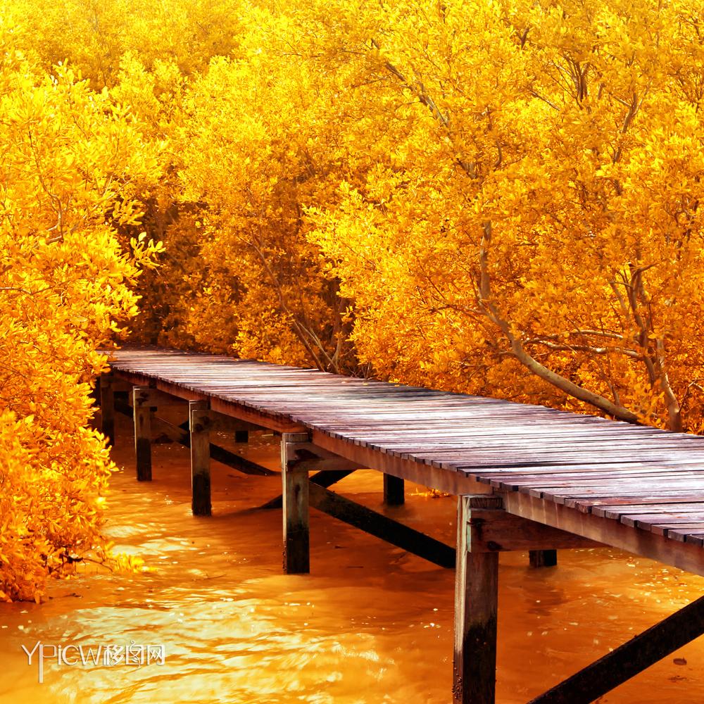 秋季树林落叶秋天自然风光风景美景景观115